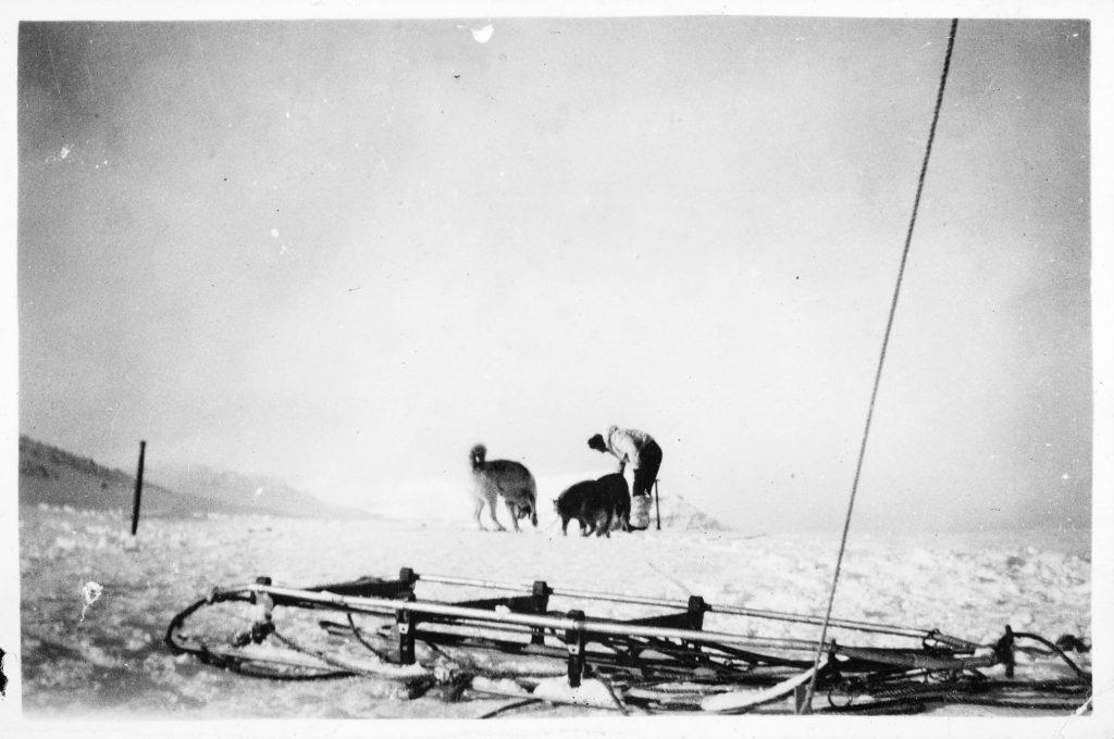 Slede med trekkhund på Jan Mayen