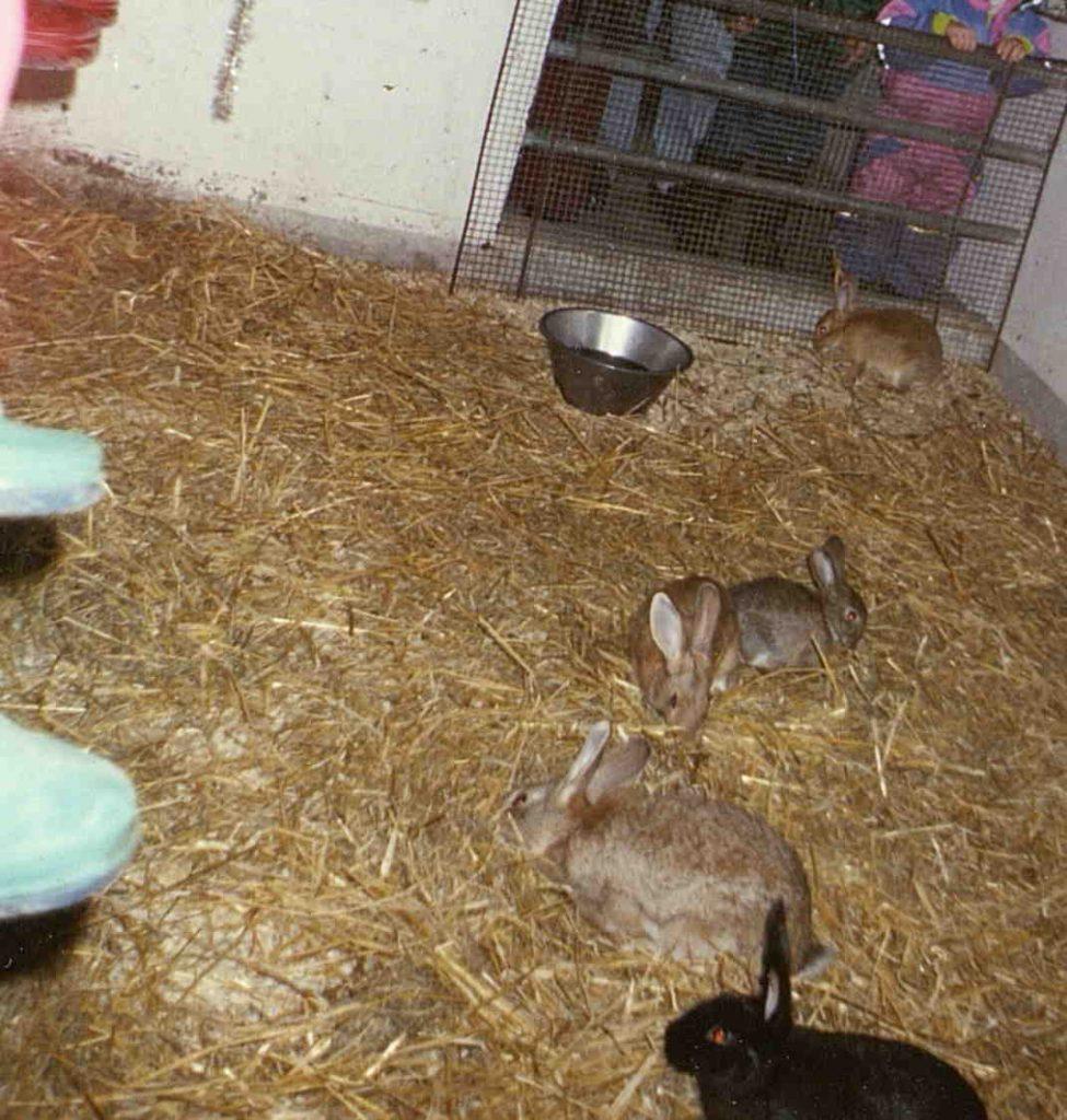 """Besøk til kaninene under """"Jul i fjøset"""" på Holt landbruksskole 11.12.1994"""
