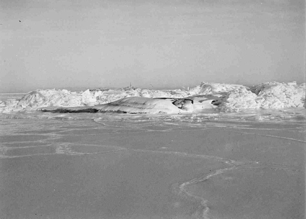 Havis på sørlandskysten februar 1940. Foto: Leif Ødegaard